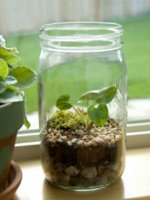 Terrarium-Jar