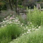 Design a Meadow Garden