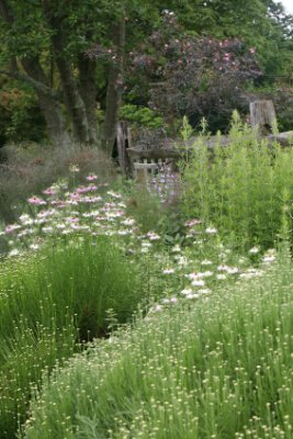 Design A Meadow Garden