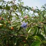 Decorative Plant Clips for Vines