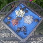 Create Succulent Art