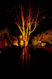 garden-lights-tree