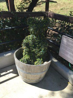 Bear Topiary