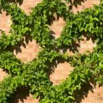 Climbing Vine in Squares