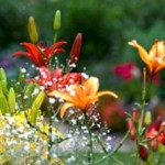 Plant Forms in Flower Gardens