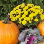 Having a Fall Container Garden
