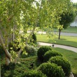 Designing Gardens with Shrubs