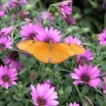 Designing a Butterfly Garden