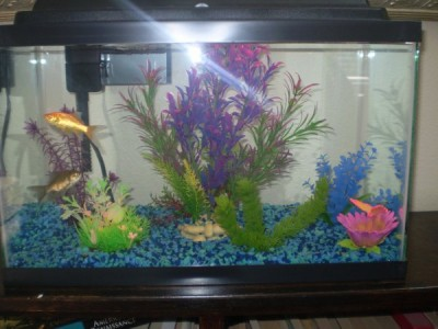 10 gallon fish tank goldfish goldfish tank 10 gallon for 10 gallon fish tank decoration ideas